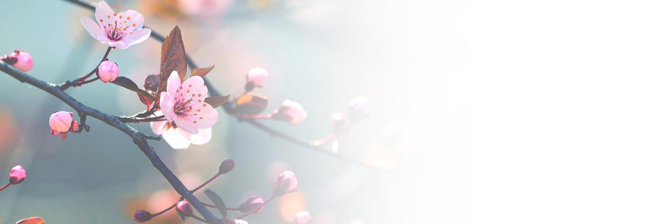 Frühling-Kosmetik