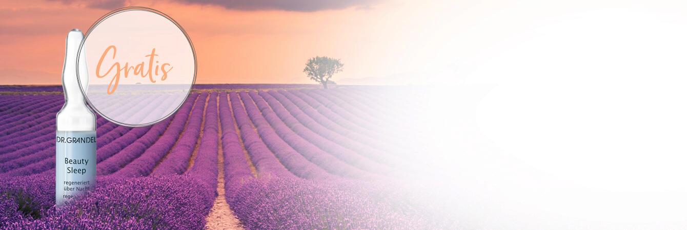 Lavendeltijd